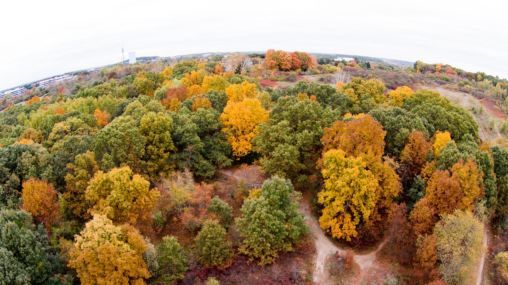 Drone view of trees in park in fall.