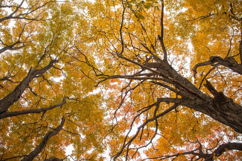 Forest canopy from below at Mary Cummings Park