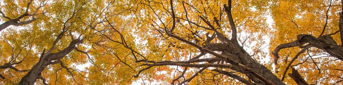 Mary Cummings Park canopy in fall