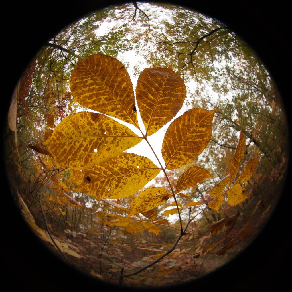 Fisheye view of fall plant at Mary Cummings Park
