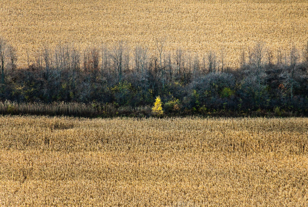 Aerial of Fall tree, upstate New York