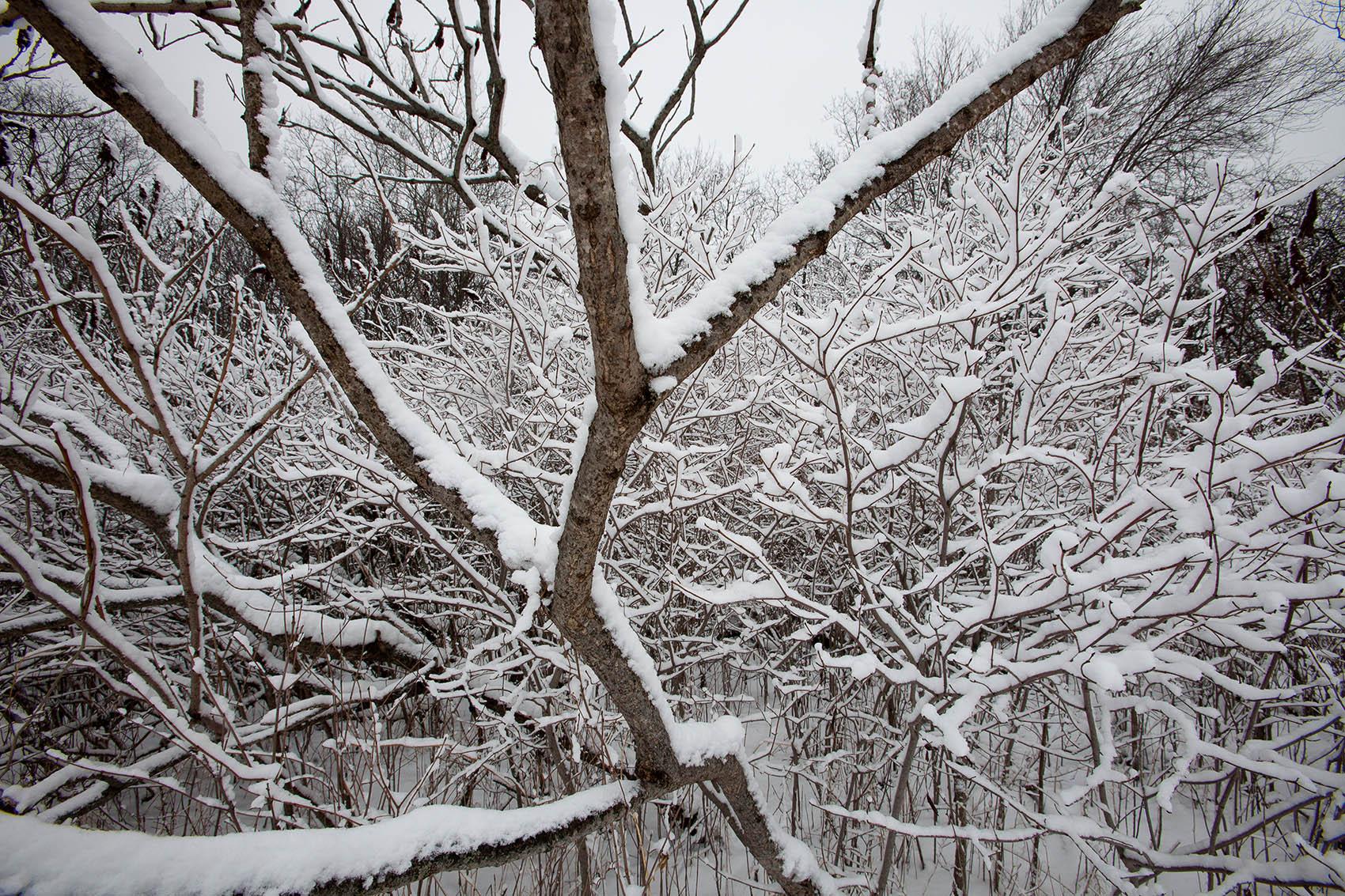 Fresh snow at Mary Cummings Park