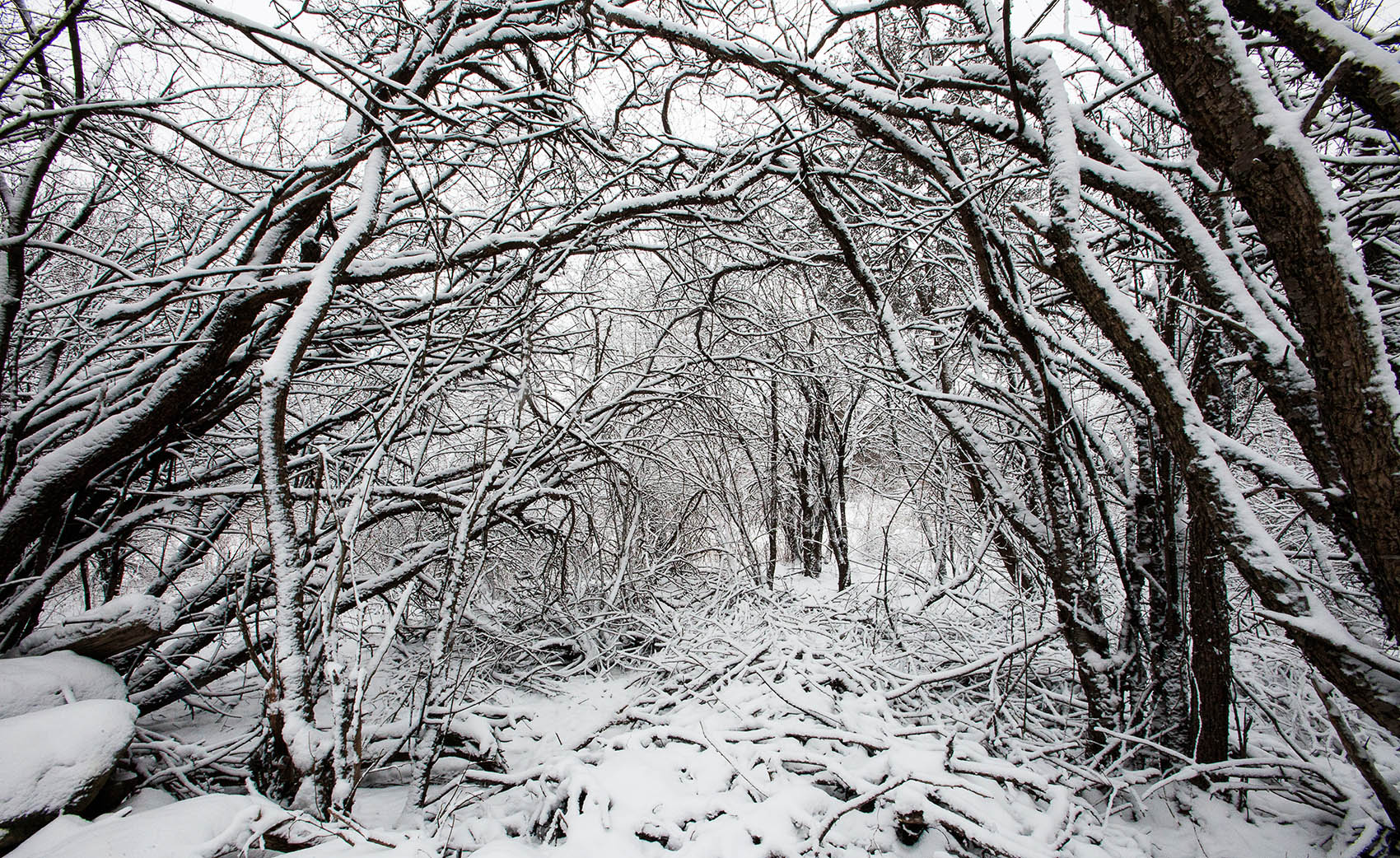 Winter snow in a thicket at Mary Cummings Park