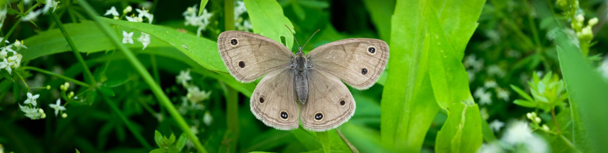 Moth at rest