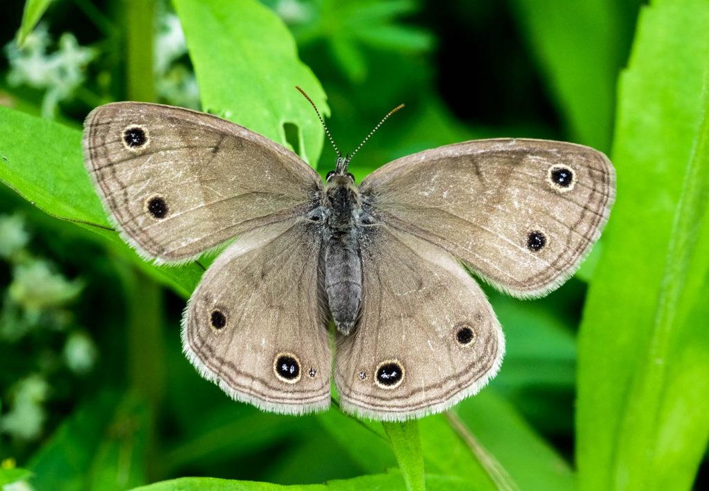 Moth resting on weeds