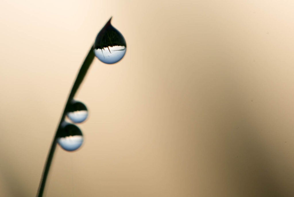 Droplets forming lenses with image of horizon.