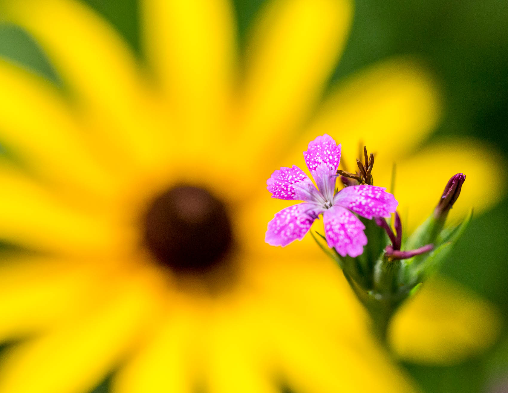 close ups of flowers