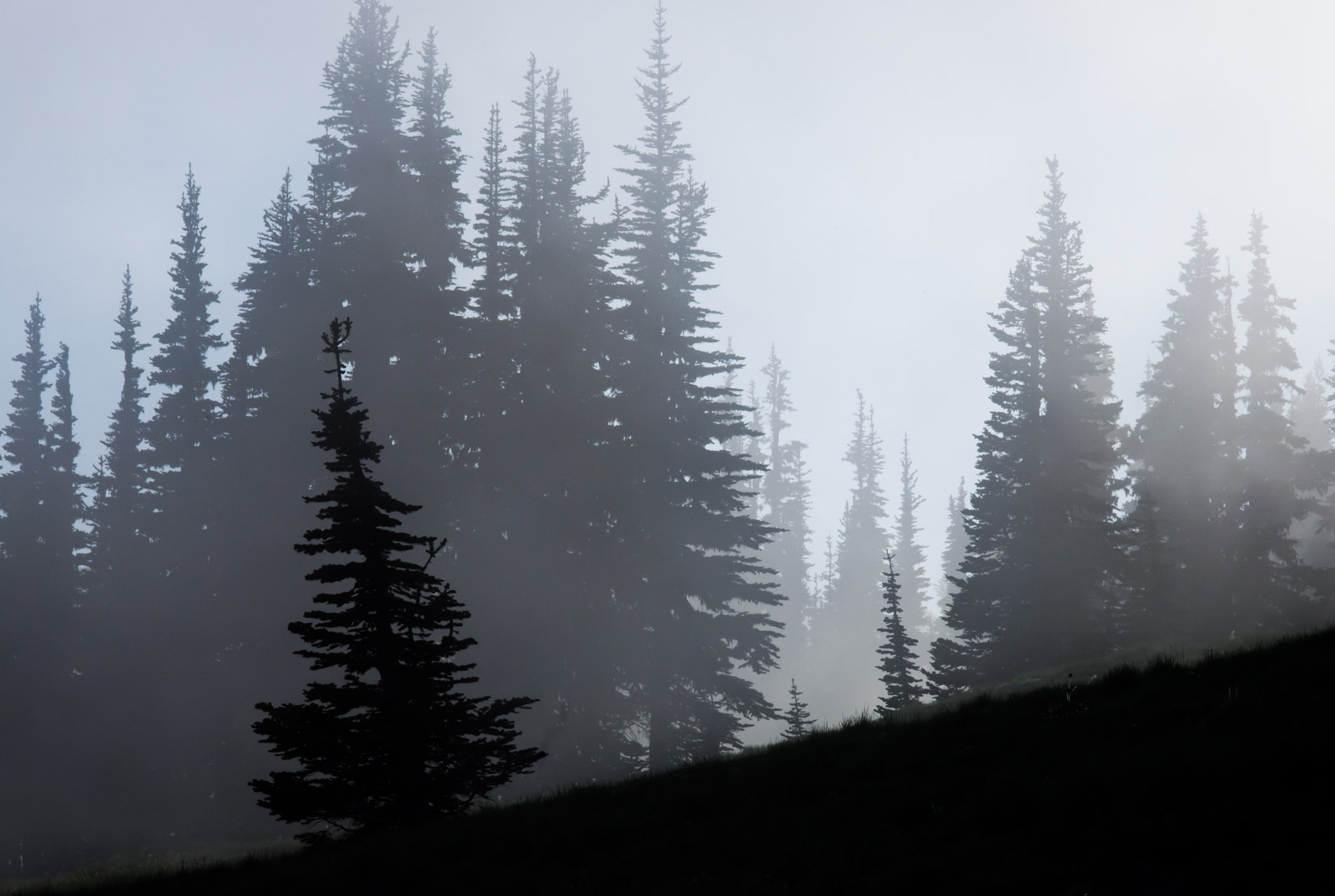 Trees in mist create layers of gray.