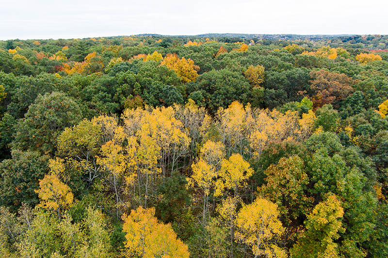 aerial view of park in fall