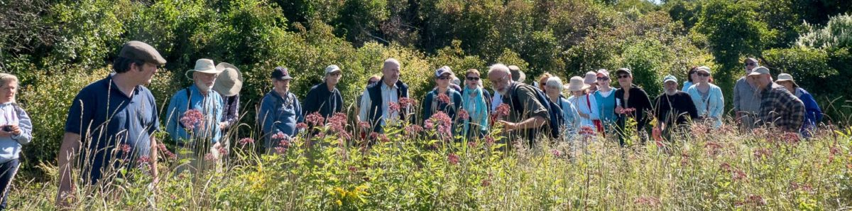 Ted Elliman leads wildflower walk