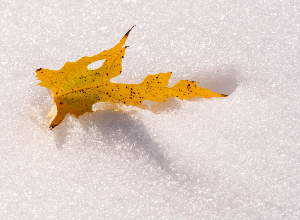 Snow and leaf.