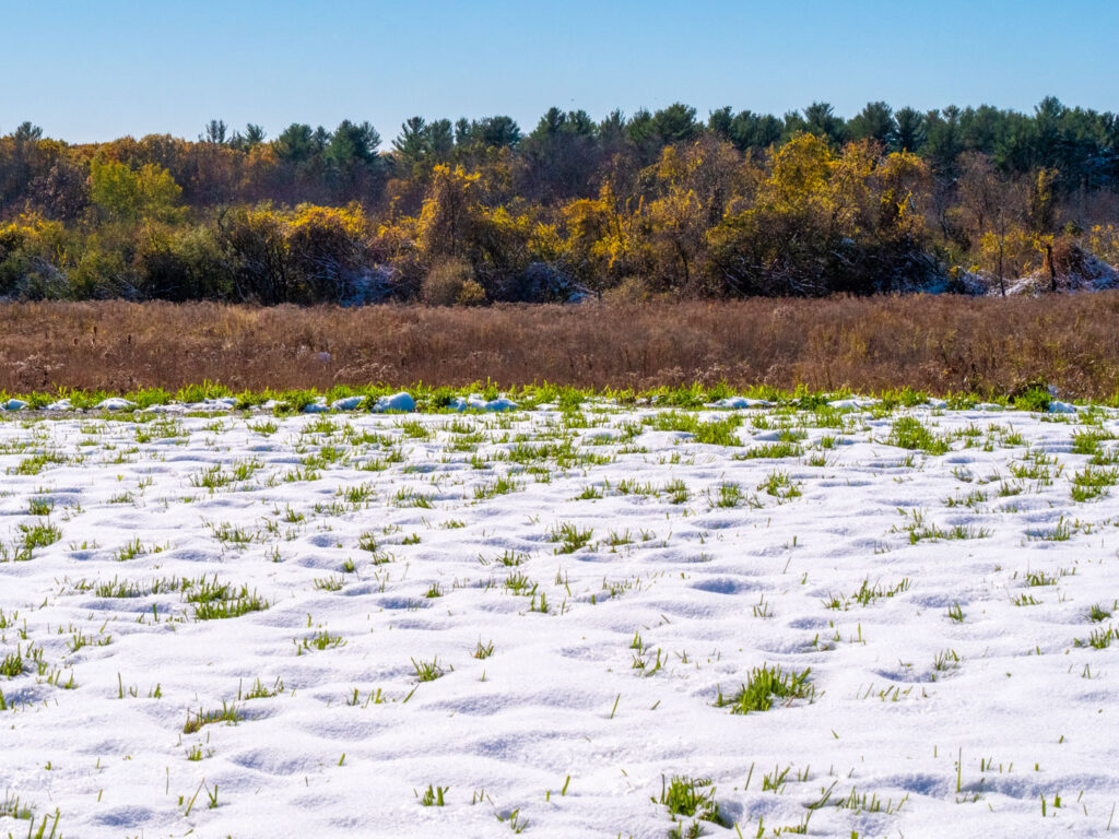 Grass and snow contrasted with fall color