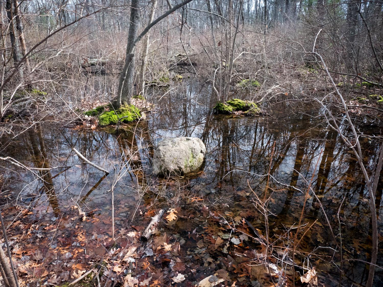 Vernal Pool, Whispering Hill Woods