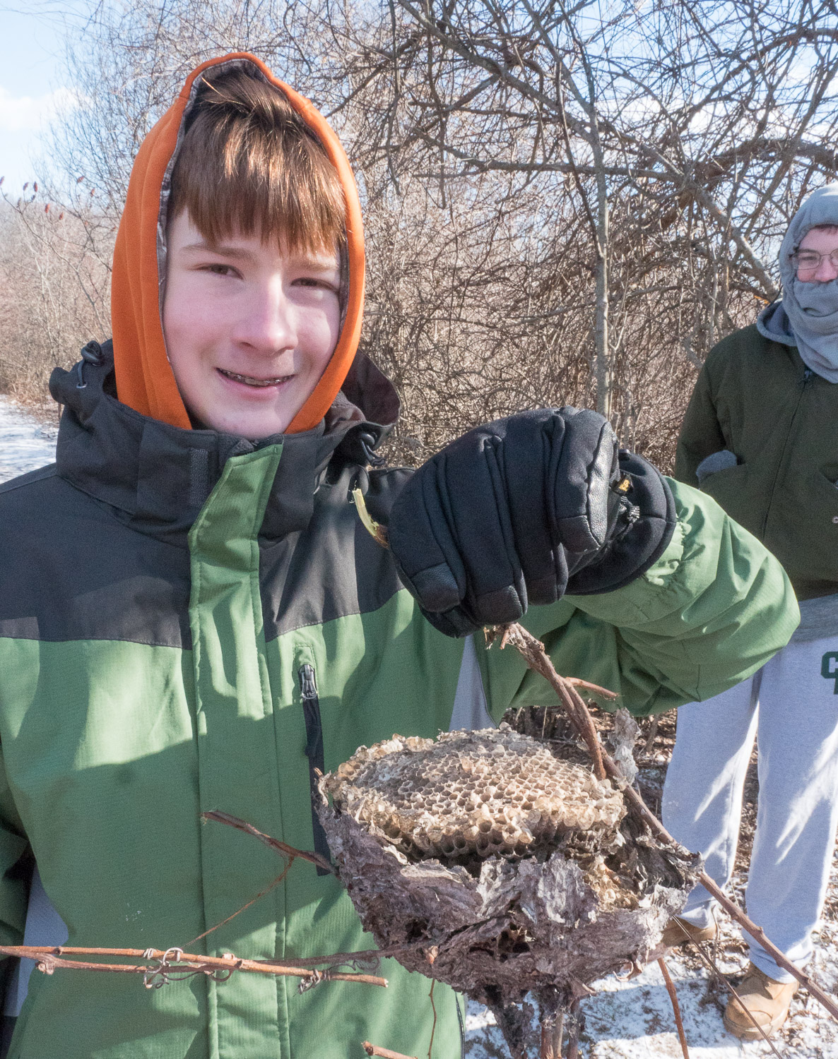 A scout gets a wasp nest to bring home as a nature souvenir.