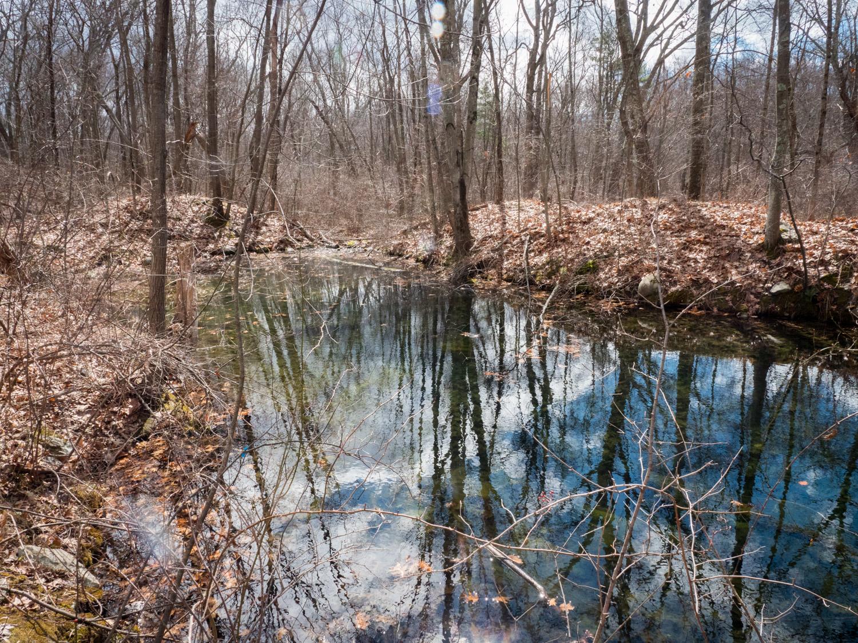 Vernal Pool, Mary Cummings Park