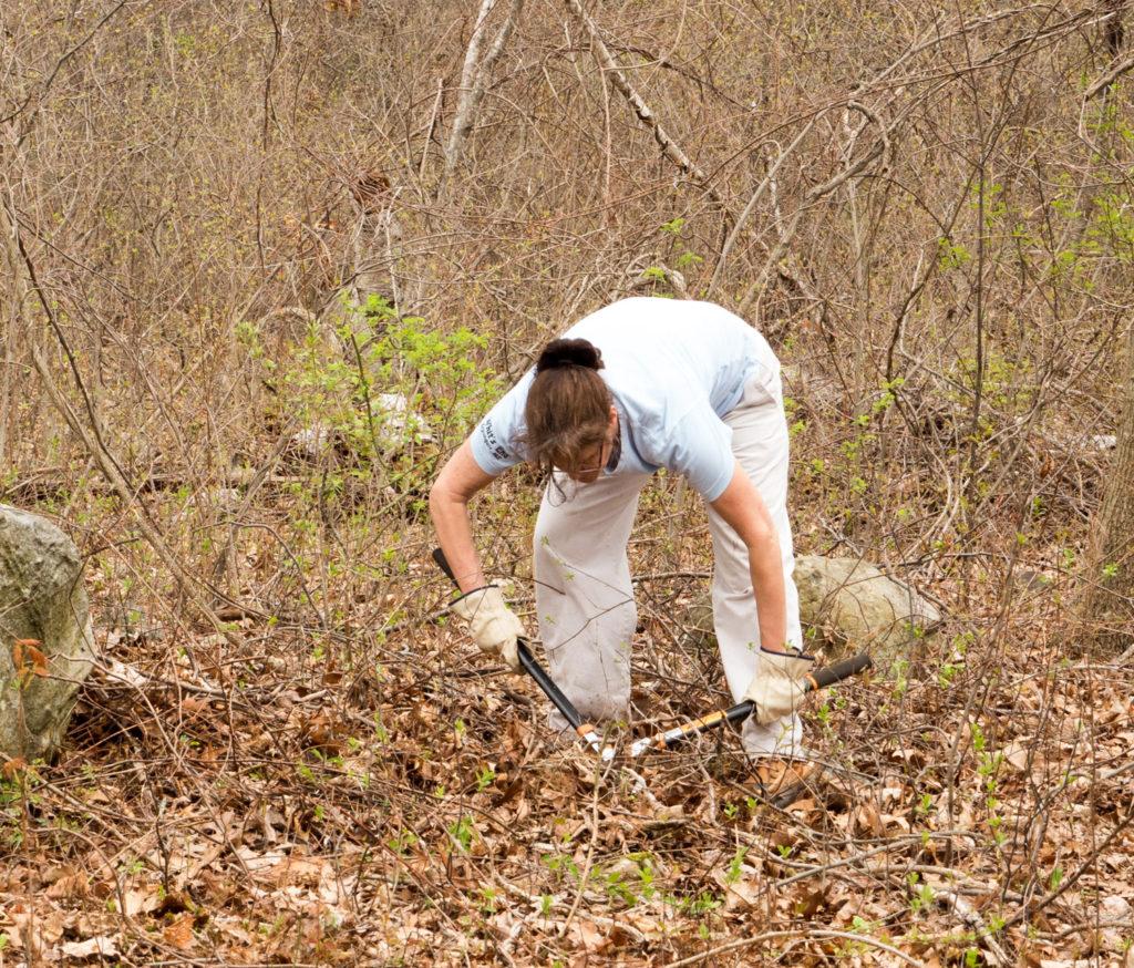 VMWare volunteer invasive vine removal at Mary Cummings Park