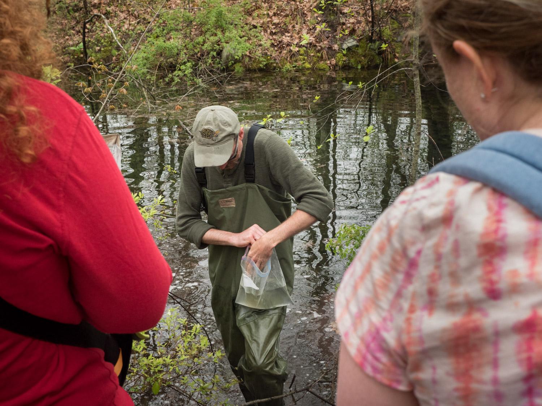 Finding vernal pool wildlife at Mary Cummings Park