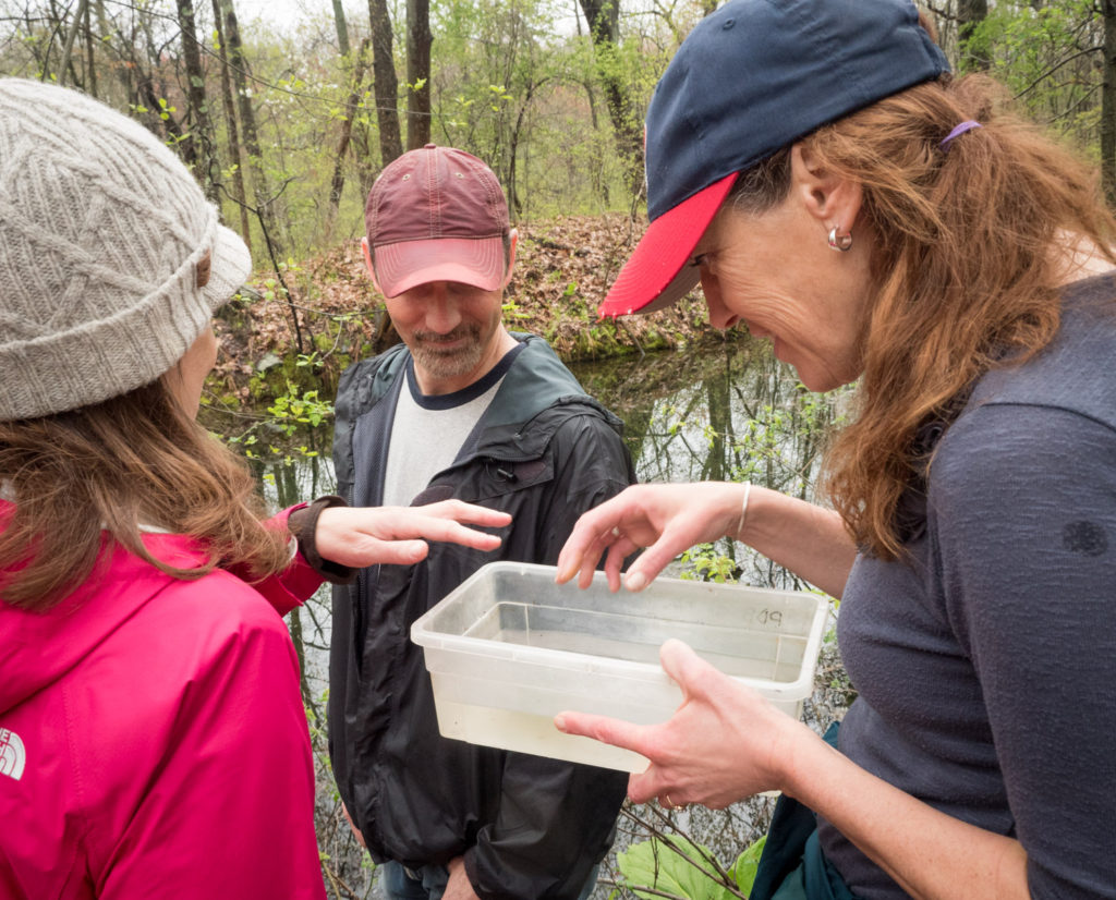Finding vernal pool wildlife at Mary Cummings Park