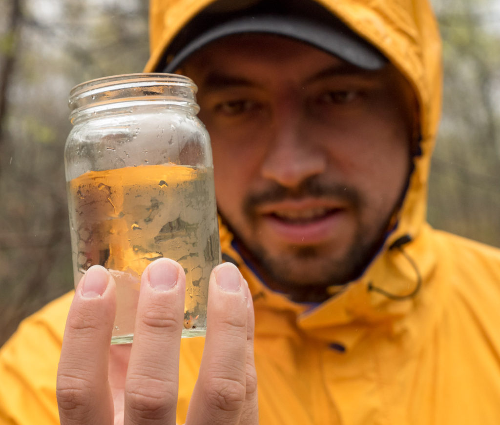 Looking at vernal pool fairy shrimp at Mary Cummings Park