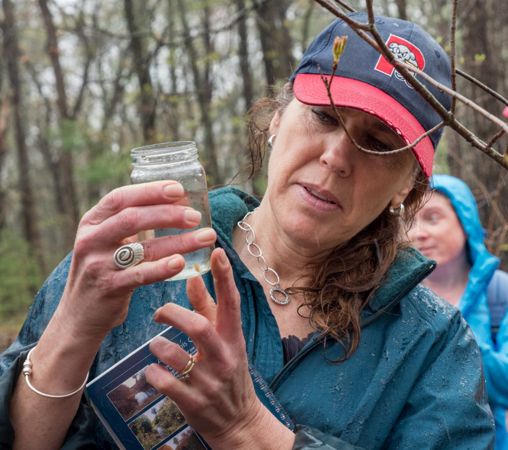 Looking at vernal pool life forms at Mary Cummings Park