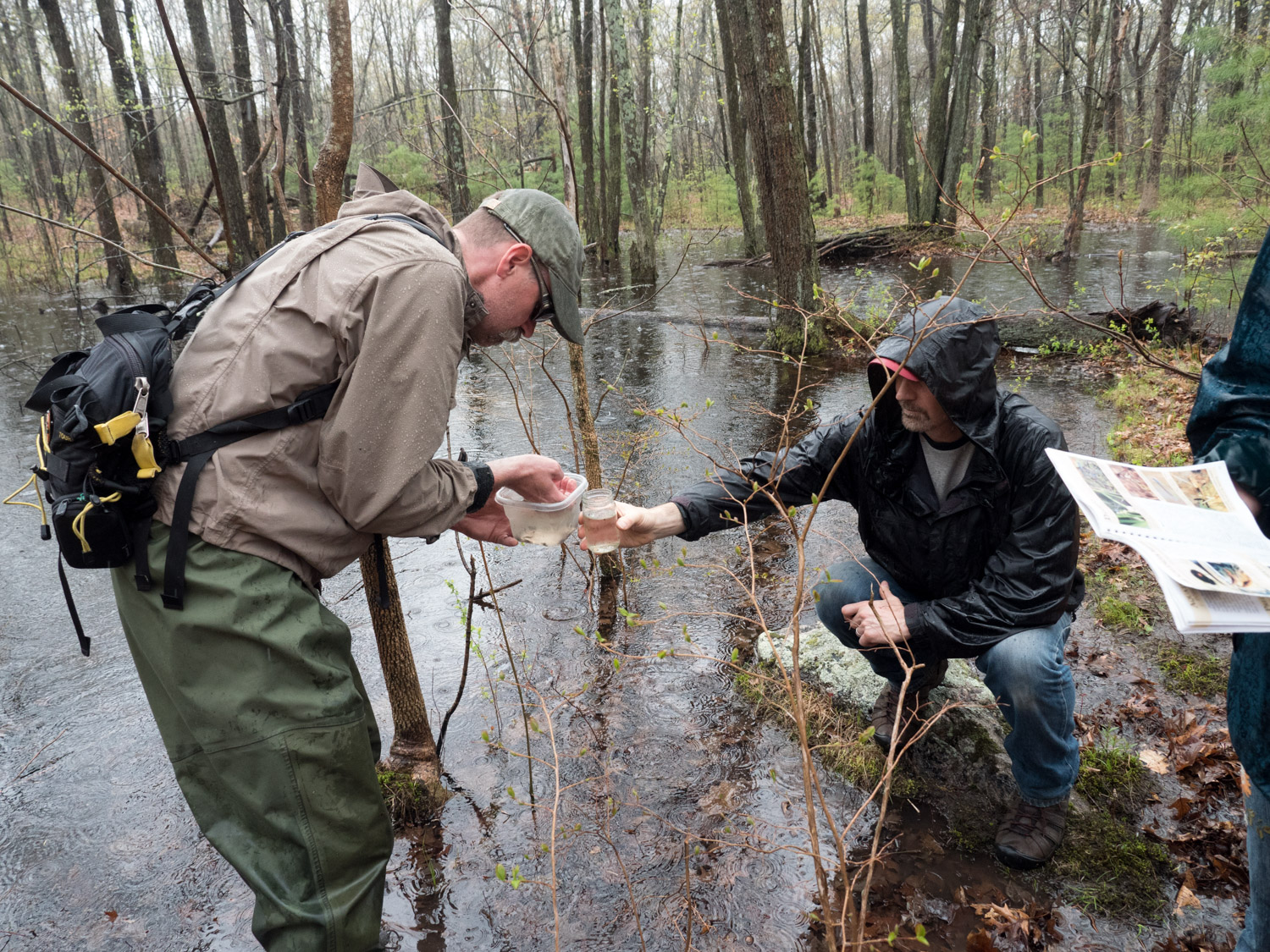 Finding vernal pool life forms at Mary Cummings Park