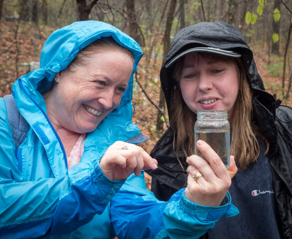 Seeing vernal pool fairy shrimp at Mary Cummings Park