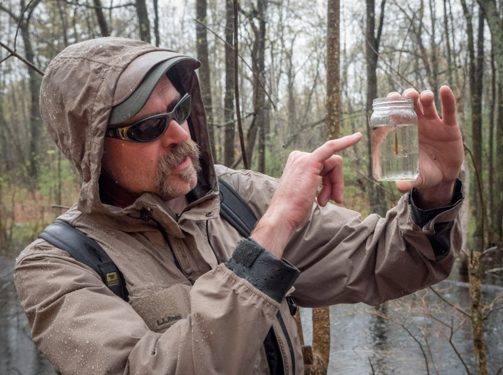 Matt Burne finds life in a vernal pool at Mary Cummings Park