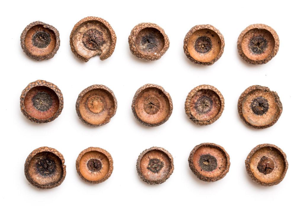 acorn grid