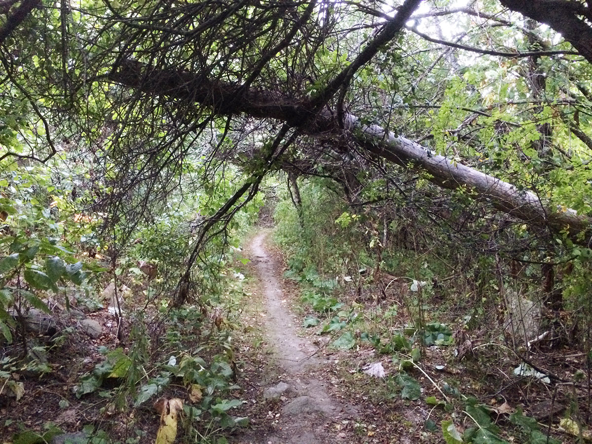 blocked trail at Mary Cummings Park